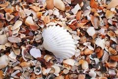 Shell na praia fotos de stock