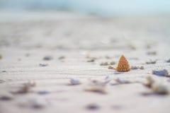 Shell na praia Imagens de Stock