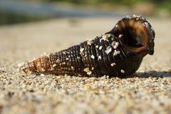 Shell na praia Fotos de Stock Royalty Free