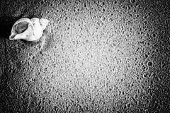 Shell na praia Imagem de Stock