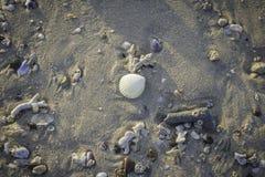 Shell na praia Foto de Stock