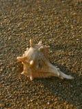 Shell na praia 4 da areia Fotografia de Stock