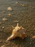 Shell na praia 5 da areia Imagens de Stock Royalty Free