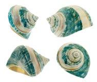 Shell nacarado Fotos de archivo