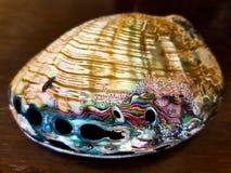 Shell nacarado grande en una tabla de madera Fotografía de archivo libre de regalías