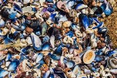 Shell nas rochas Imagem de Stock
