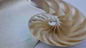Shell nautilus fibonacci section spiral pearl symmetry half cross golden ratio structure growth footage. Shell nautilus fibonacci section spiral pearl symmetry stock footage
