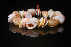 Shell Necklace Royalty Free Stock Images