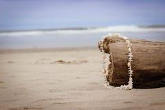Shell Necklace na praia fotografia de stock