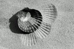 Shell negro Imágenes de archivo libres de regalías