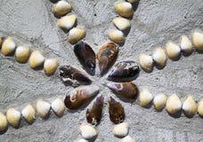 Shell nella casa Fotografia Stock