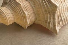 Shell no couro branco Fotografia de Stock Royalty Free