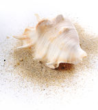 Shell ob sand Stock Photography