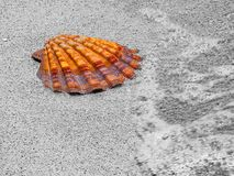 shell in ocean Royalty Free Stock Photos