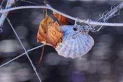 Shell och blad på ett rep Arkivfoto