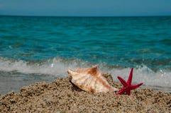 Shell och sjöstjärna på sand Royaltyfri Bild