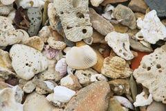 Shell och små stenar på havskusten på Sam Roi Yot National parkerar, Thailand Arkivfoto