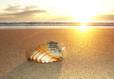 Shell och soluppgång Royaltyfri Foto