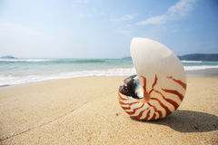 Free Shell On Beach Stock Images - 13686424