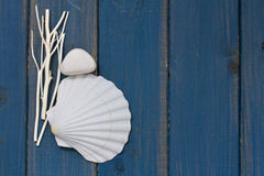 Free Shell On Blue Background Royalty Free Stock Image - 56618706
