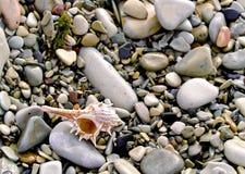 Free Shell On Sea Pebble Royalty Free Stock Photo - 4736315