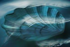 Shell onder water Royalty-vrije Stock Afbeeldingen