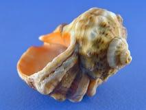 Shell op blauw Stock Afbeelding