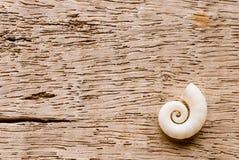 Shell op drijfhout stock afbeeldingen