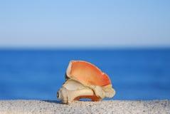 Shell op een achtergrondoverzees Stock Afbeeldingen