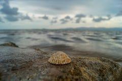Shell op een rots voor het overzees met aardige bokeh op Koh Phangan, Thailand royalty-vrije stock foto's