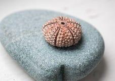 Shell op een steen Stock Afbeeldingen