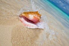 Shell op een wit zandstrand dichtbij blauw ziet royalty-vrije stock foto's