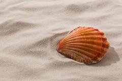 Shell op een zandig strand stock afbeelding
