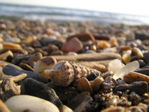 Shell op het strand Stock Foto
