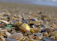 Shell op het strand Royalty-vrije Stock Fotografie