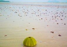Shell op het Strand stock afbeeldingen