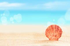 Shell op het Strand Stock Afbeelding
