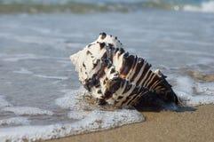 Shell op het strand Stock Foto's