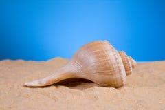 Shell op het zand Stock Afbeeldingen