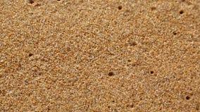 shell op het zandige strand, welke wassen van een golf stock videobeelden