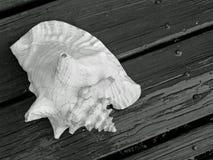 Shell op Hout Stock Afbeeldingen