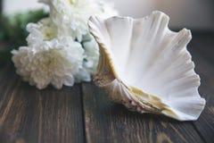 Shell op houten lijst met selectieve zachte focuse Royalty-vrije Stock Afbeeldingen