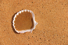 Shell op sinaasappel beachsand Royalty-vrije Stock Afbeeldingen