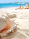 Shell op strand stock foto