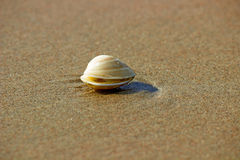 Shell op strand Stock Fotografie