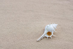 Shell op strand Royalty-vrije Stock Foto's