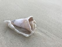 Shell op strand stock foto's