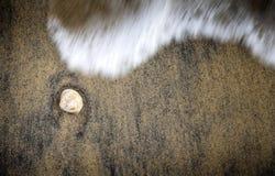 Shell op Zand Stock Afbeelding