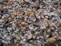 Shell op zand royalty-vrije stock foto