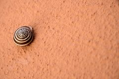 Shell on orange background. Brown and white hell on orange background Stock Image